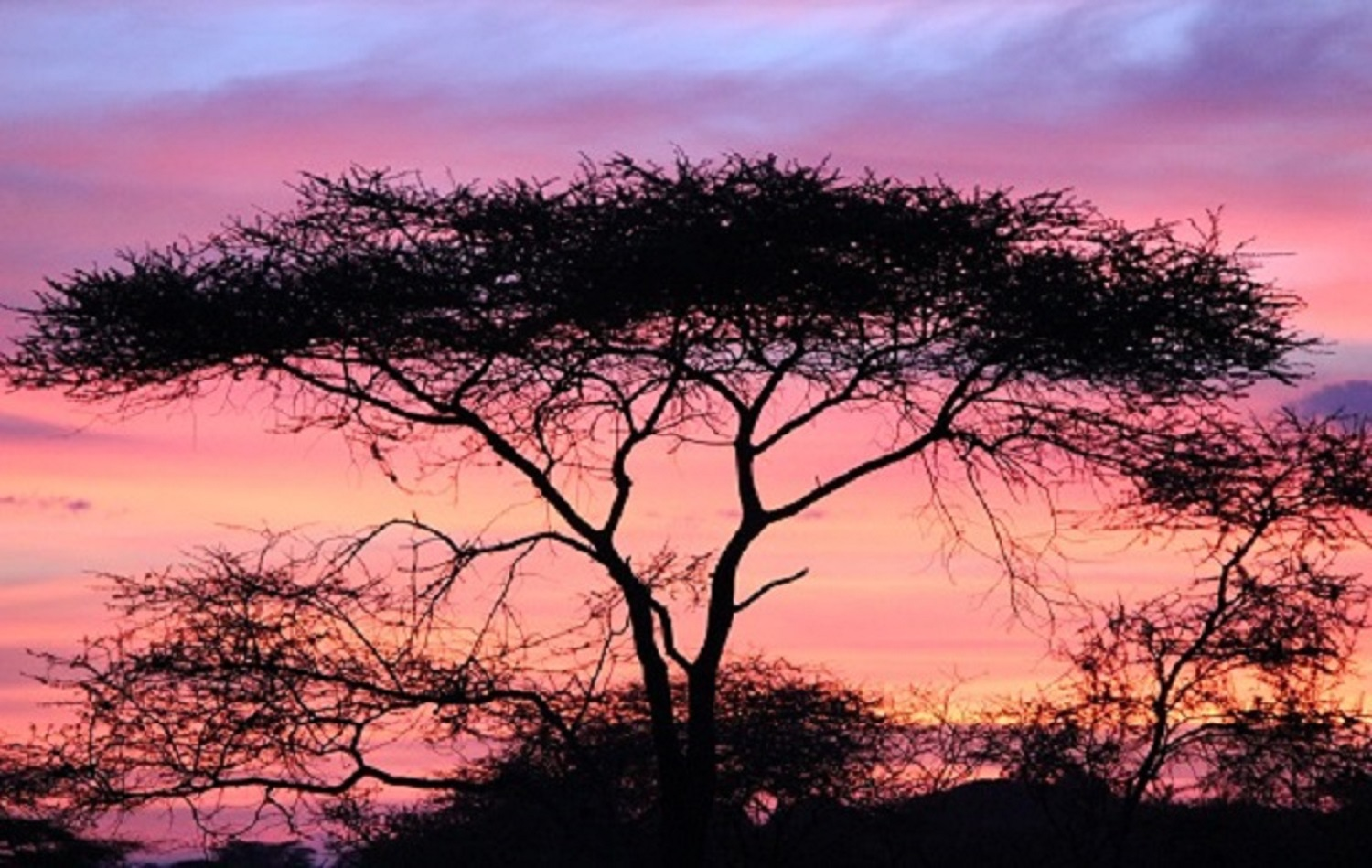 pink sunset with large tree